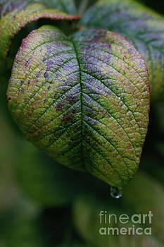Green Leaf by Tracy Hall