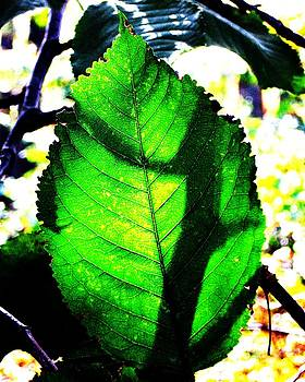 Green Leaf with Shadow by Brad Scoggins