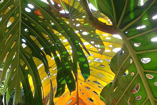 Green Leaves and Shadows by Chere Force