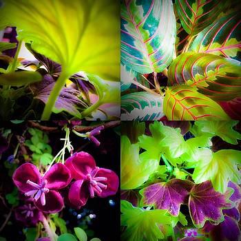 Green Leaves by Damini Celebre