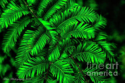 Green Leaves by Linda Blair