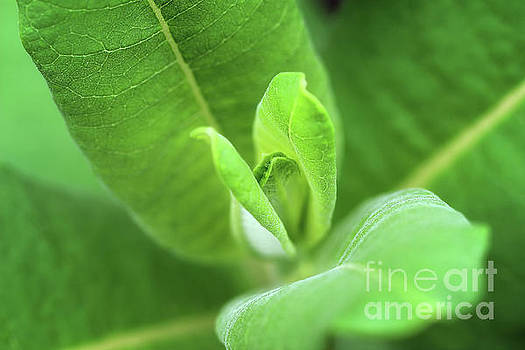 Green Life by Karen Adams