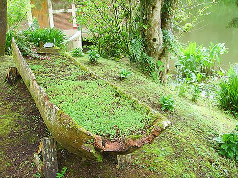 Green Log by John Hornsby