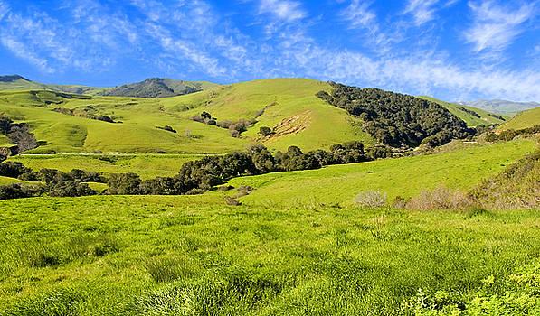 Green Meadow Santa Ynez valley CA by Eyal Nahmias