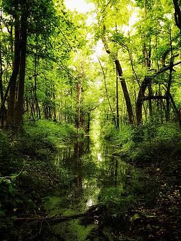 Green Morning by David Oakill