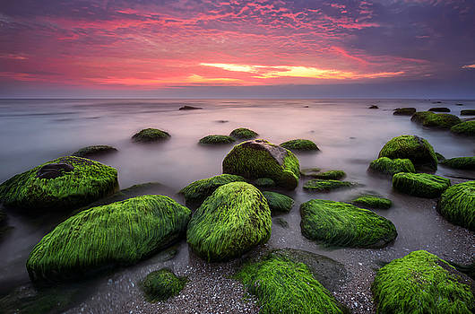 Green morning by Evgeni Ivanov