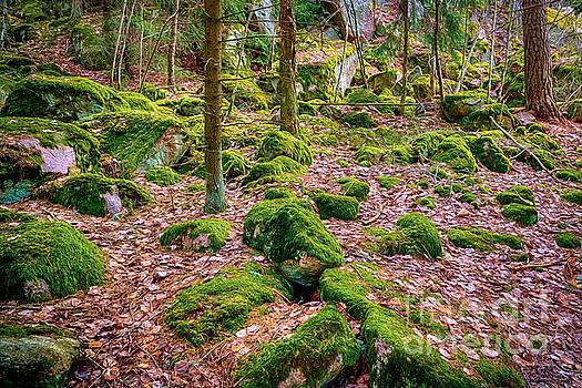 Green moss by Veikko Suikkanen