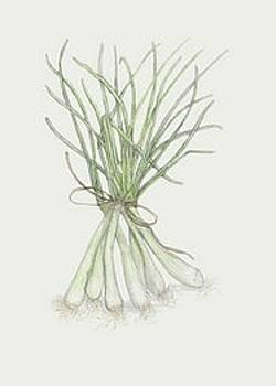 Green Onions by Tara Poole