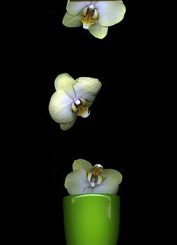Christian Slanec - Green Orchids