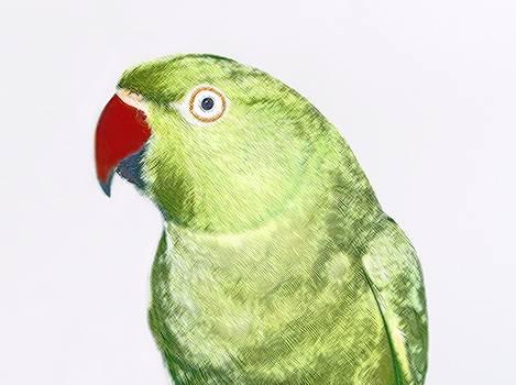Green Parrot by Sajjad Musavi
