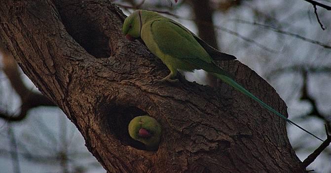 Green parrots on a tree by Emmanuel Varnas
