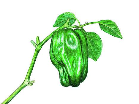 Green Pepper by Ed Berlyn