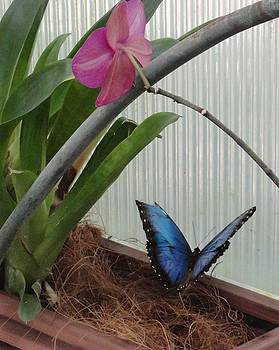 Blue Butterfly Pink Flower by Mozelle Beigel Martin