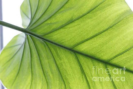 Green plant leaf by Geraldine Jane Ramos-Bittenbinder