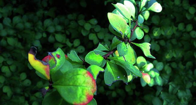 Green Plants by Mohammad Raiyn