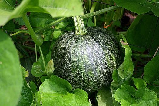 Annie Babineau - green pumpkin