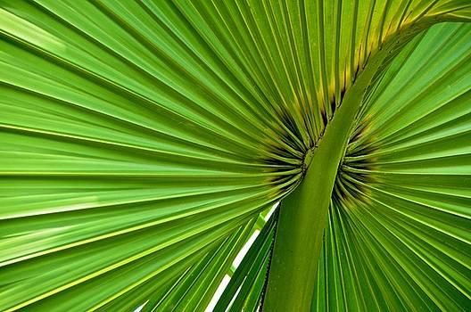 Green Radiation by Mansour Zadrafie