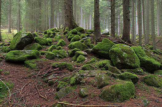 Green Rock Forest by Wim Slootweg