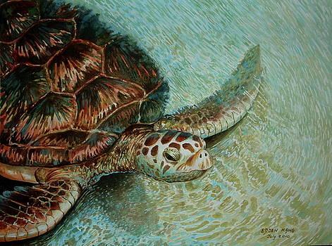 Edoen Kang - Green Sea Turtle - Close Encounter