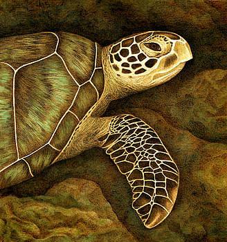Green Sea Turtle by Cate McCauley