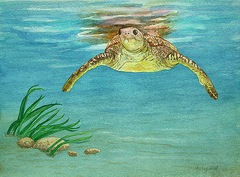Green Sea Turtle by Dorothy Riley