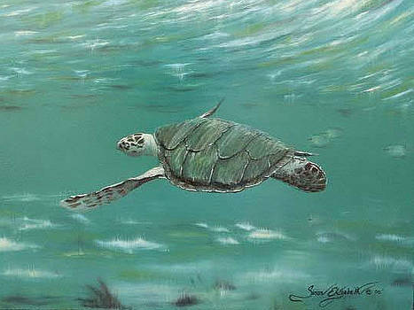 Green Sea Turtle by Susan Elizabeth Wolding