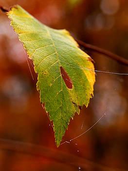 Linda McRae - Green Silk