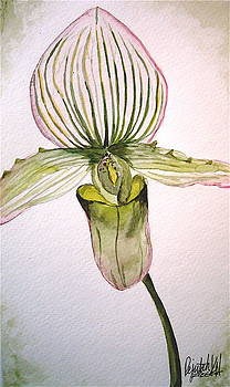 Green Slipper Orchid by K Hoover