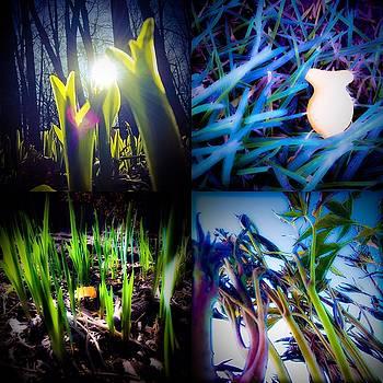 Green Fish by Damini Celebre