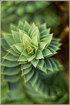Green star by Geraldine Scull