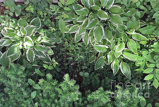 Green Textures by Barbara Plattenburg