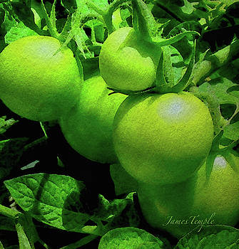 James Temple - Green Tomatoes