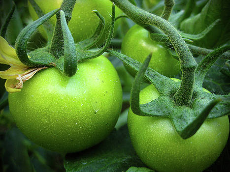 Kamil Swiatek - Green Tomatoes No.1