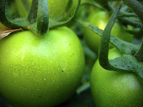 Kamil Swiatek - Green Tomatoes No.2