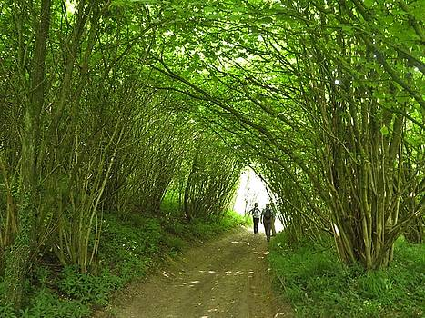 Green Tunnel by Ann Sullivan