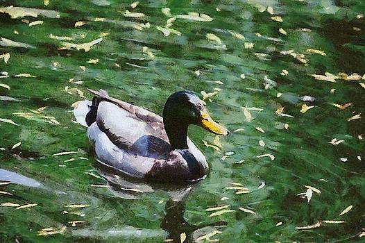 Green Water Duck by Chris Bird