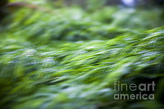 Green waterfall 1 by Serene Maisey