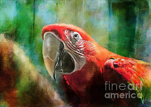 Lois Bryan - Green Winged Macaw
