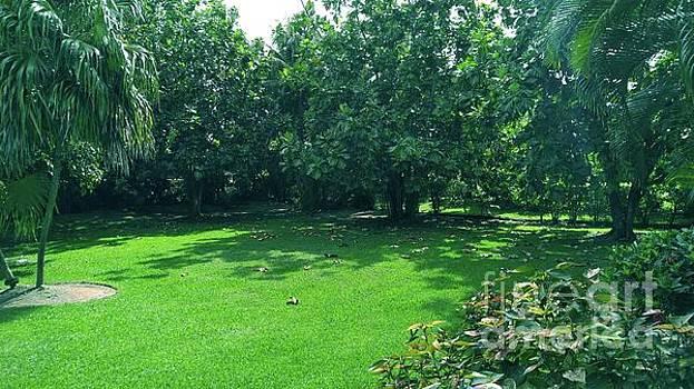 Gary Wonning - Green Yard