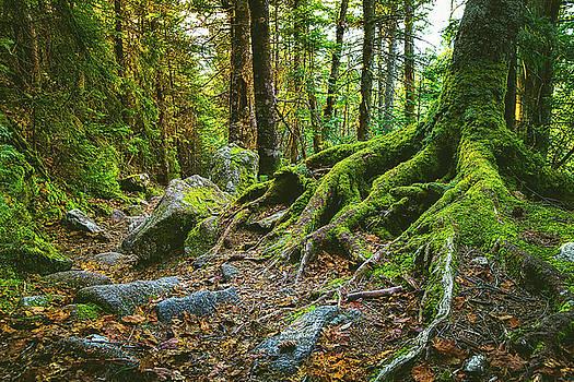 Greenleaf Trail by Robert Clifford