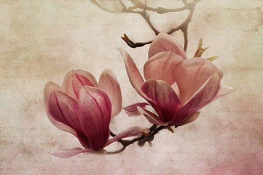 Greetings From Spring by Claudia Moeckel