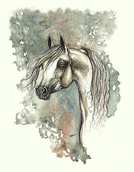 Angel Tarantella - Grey arabian horse 2013 11 18
