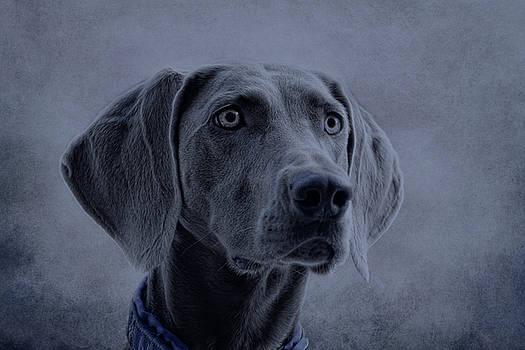 grey Emma by Claudia Moeckel