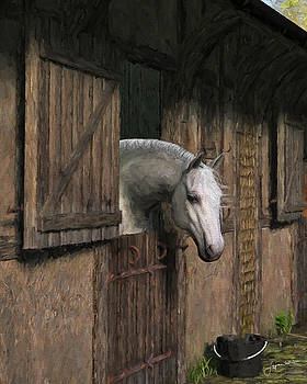 Jayne Wilson - Grey Horse in the Stable - Waiting for Dinner
