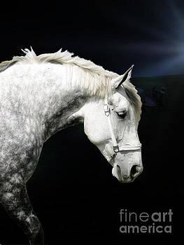 Grey Percheron Beauty II by Al Bourassa