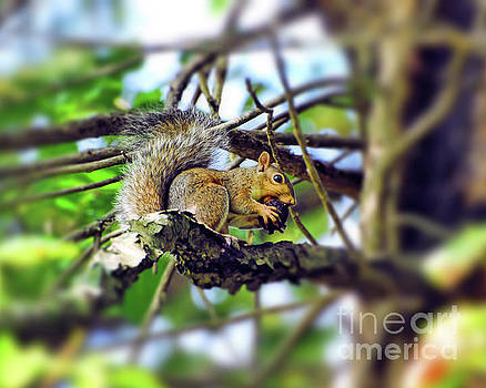 Grey Squirrel Gathering Food by Kerri Farley