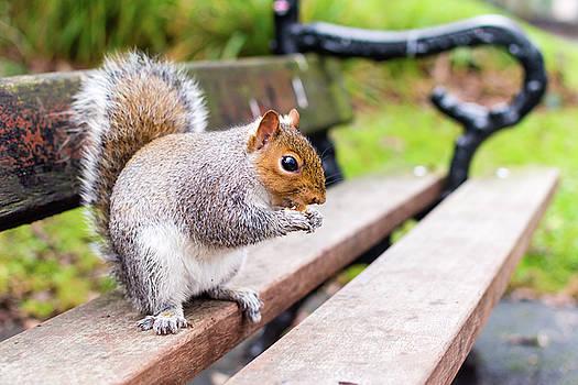 Jacek Wojnarowski - Grey Squirrel in Autumn Park D