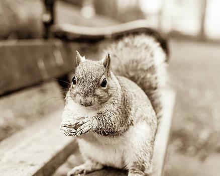 Jacek Wojnarowski - Grey Squirrel in Autumn Park G