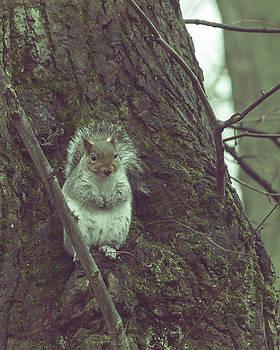 Jacek Wojnarowski - Grey Squirrel in Autumn Park N