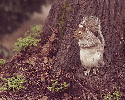 Jacek Wojnarowski - Grey Squirrel in Autumn Park Q